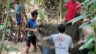 ikan di Sungai Kalimantan.