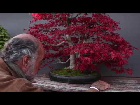 Luis Vallejo Bonsai garden