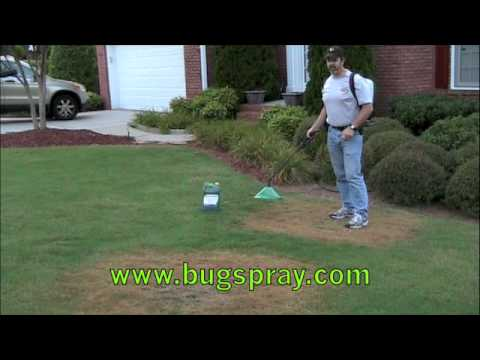Green Lawn Fungus Damage Treatment