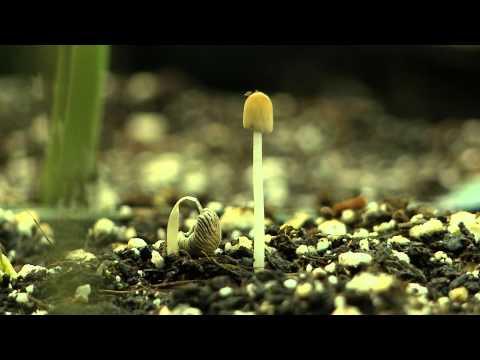 Life & Death of Mushroom Time Lapse
