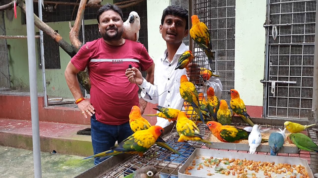 Blue Fonted Amazon Parrot & Baby Sunconures About To Travel To Their New Home At Maharashtra Nagpur.
