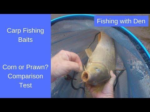 Carp Fishing Baits - Corn Vs Prawn Comparison Test