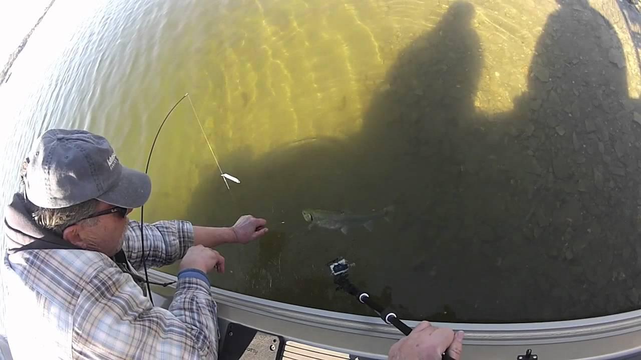big trout using power bait tips & rigging setup gopro - youtube, Fly Fishing Bait