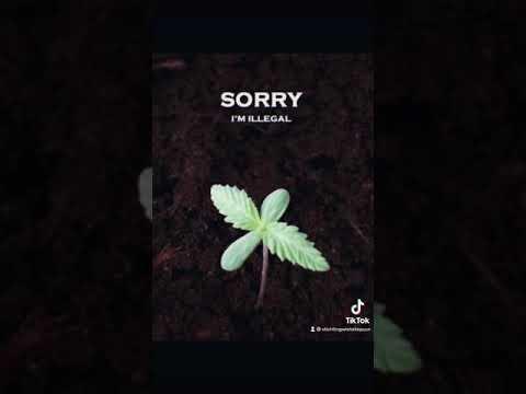 Sorry i'm illegal …. Waanzinnig 👎