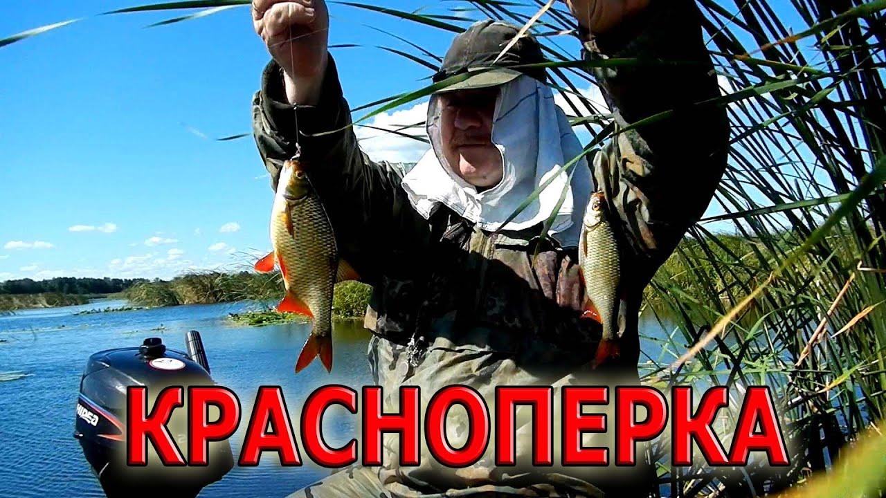видео рыбалка ловля на поплавочную удочку