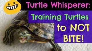 Turtle Adventures: Turtle Whisperer - Training Turtles to NOT BITE!