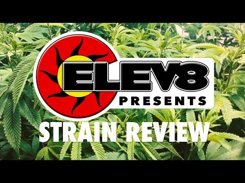 Strain Review: OG Bubba Kush - ELEV8 Presents