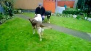 Dog Training Vancouver.3gp