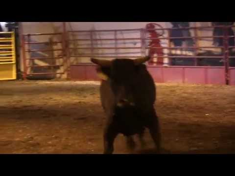 Rafter G Cattle Co's 32 Scores 83
