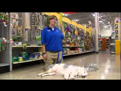 Deaf and Blind Dog Learns New Tricks
