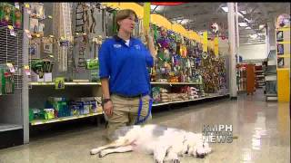 Deaf And Blind Dog Learns New Tricks