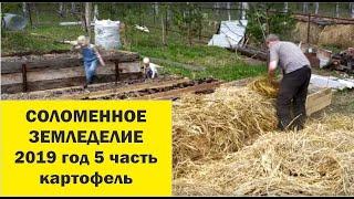 Соломенное земледелие 2019-5 Посадка картофеля.