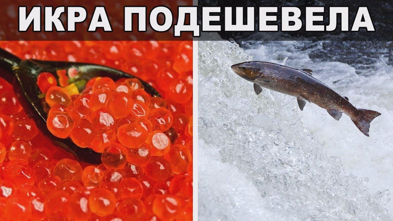 Рыбаки купаются в деньгах