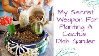 My Secret Weapon For Planting A Cactus Dish Garden
