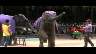 Шоу слонов в Паттайе, Таиланд, 2012
