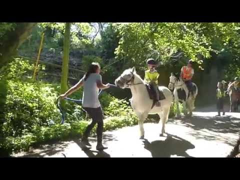New Forest Holiday 2016 Day Four Horse Riding At Bagnum