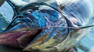 Pêche à l'espadon