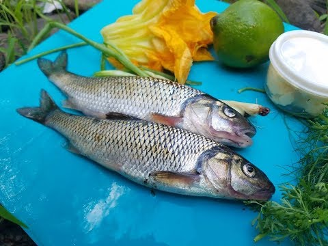 Creek Chubs (Trash Fish), Can You Eat Them!? Catch, Clean, Cook! Taste Test!