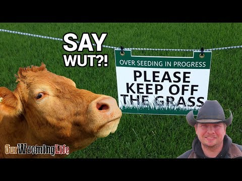 Overseeding Pasture - The Project List