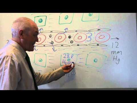 Body fluids 2, Movement between fluid compartments