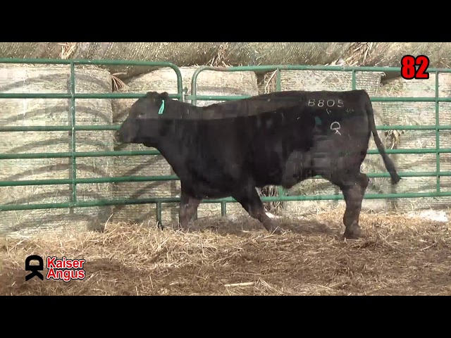 Kaiser Angus Ranch Lot 82