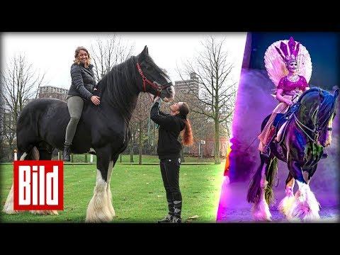 "Apassionatas Riesen-Pferd - Hengst-Gigant ""Jos"" begeistert"