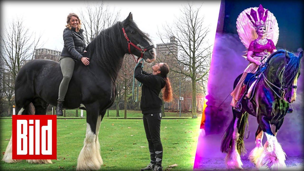 Riesen Pferd
