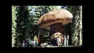 Cамые большие грибы