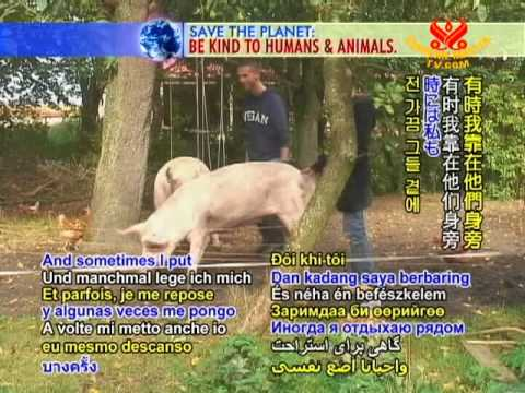 Germany's Butenland Farm: Happy Retirement Home for Animals  (In German) (2/2)