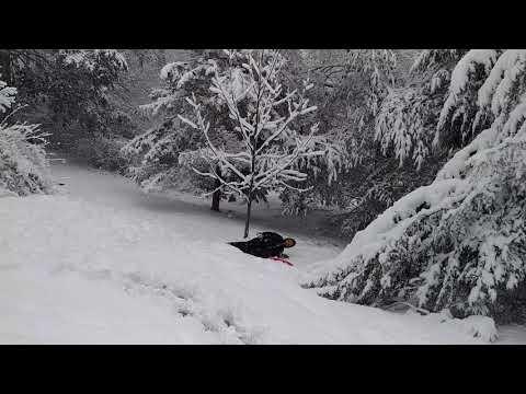 Zachary dumb sledding part 2