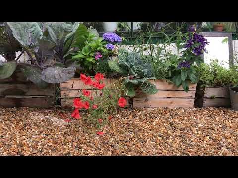 3 växter som kan bli en mardröm för din trädgård - odlar du invasiva otillåtna växter ?