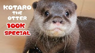 100K SUB SPECIAL! Kotaro the Baby Otter