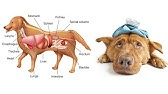 Healthy Foods to Feed Your Dog - YouTube