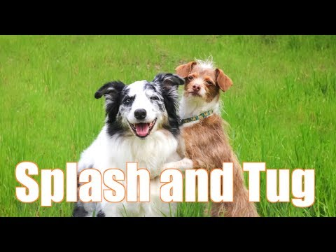 These two dogs are Best Friends -  Dog Training Tricks