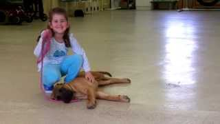 Gabby The Dog Trainer And Princess Peaches The Trained English Mastiff