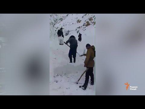 Шикори кабк рафту