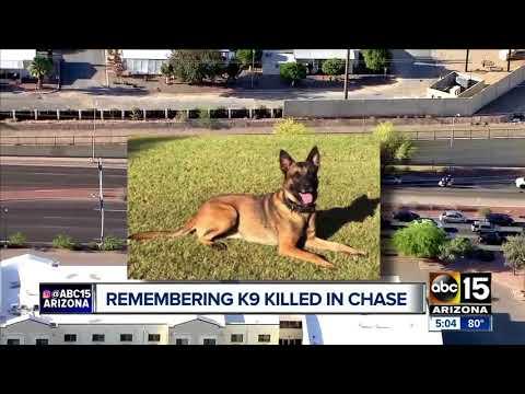 Remembering Phoenix police K-9 Bane killed in the line of duty