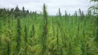Repeat youtube video Mile High (the weed song) By TCM