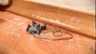 Странные существа (#2) - что живет в пауках?