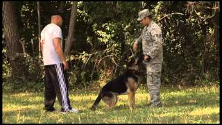 902nd Sfs Military Working Dog Training