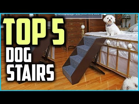 top-5-best-dog-stairs-for-high-bed-in-2019