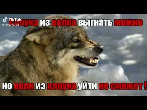 Цитаты волка из тиктока подборка   волк из тиктока l безумно можно быть первым   ОЧЕНЬ МНОГО ВОЛКОВ!