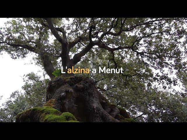 L'alzina al Centre Forestal de Menut - Dia Internacional dels Boscos 2020