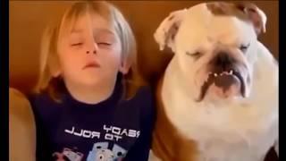 Лучшие приколы Лучшие приколы с животными 2018 смех до слез