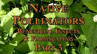 Native Pollinators, Beneficial Insects & Farmscaping Part 3