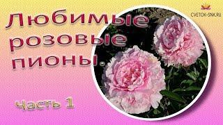 Gambar cover Любимые розовые пионы. Часть 1 / Сад Ворошиловой