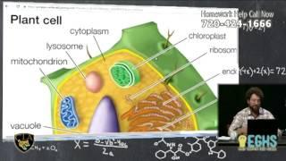 Photosynthesis [Homework Hotline 10/11/16]