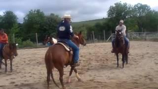 Ce que un cheval western doit savoir faire pour aller au Bétail