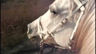 endurance training ride on arabian horse