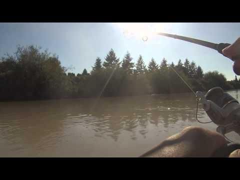 Gopro pink salmon fishing puyallup river 8 19 15 youtube for Puyallup river fishing